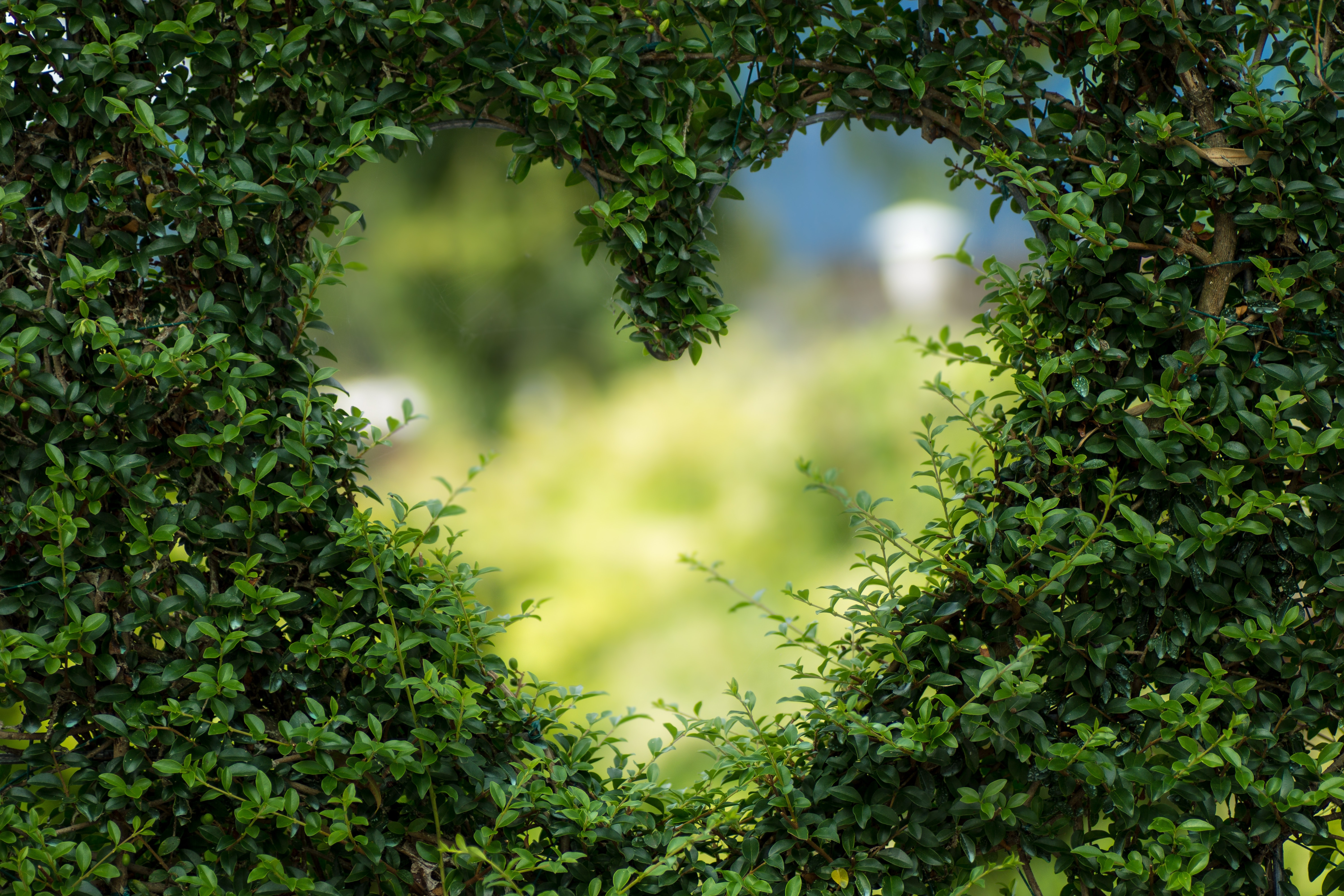 This photo shows an opening in a bush in the shape of the heart, which indicates the growth that can happen when adoptees and foster kids learn to share only with safe people.
